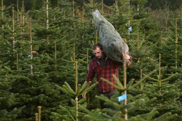 Odniesť vianočný stromček? Žiadny problém.